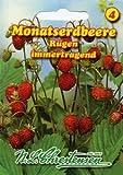 Monatserdbeere Rügen (Portion)