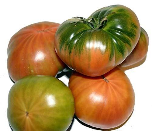 Portal Cool Tomate Raf Flavor 400 Mejores Semillas Semillas