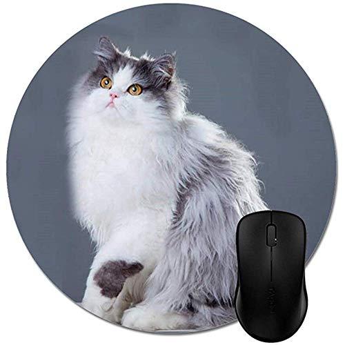 Mauspad,Schöne verwirrte persische Katze mit langem Schwanz Mauspads Trendy Office Desktop Zubehör Runde 8 '