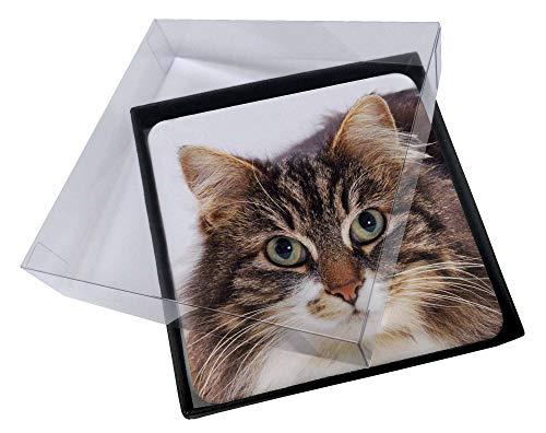 Advanta - Coaster Set 4X Gesicht der Schildpatt-Katze Bild Setzer gesetzt
