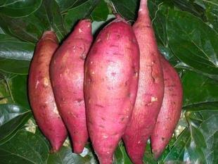 50pcs / bag High Yield Vegetable Seeds Ipomoea Batatas Seed gigante patata dolce pianta commestibile verde verdure a foglia