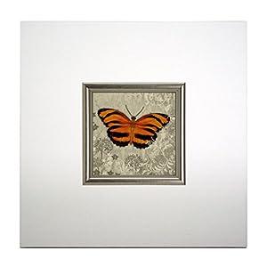 """Mini Kunstdruck auf Papier (Poster) """"Oranger Schmetterling I, mit Rahmen aus Holz und weißem Eco-Leder, ohne Glas, 40x40x1.5 cm, ErgoPaul, IGP5456-E1-80BI6-40x40x1.5"""
