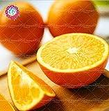SEMILLAS PLAT FIRM-20pcs rara planta de interior super dulce planta de los bonsai naranja orgánica no transgénica de alimentos saludables DIY bonsai