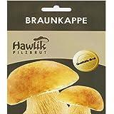 Hawlik Pilzbrut I das Original I Braunkappe als Dübel-Brut zum selber züchten...