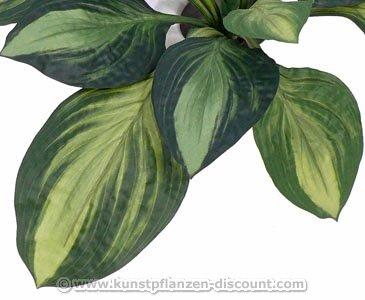 Günstige Kunstpflanze Hosta Busch mit 12 dunkelgrünen Blättern und 60cm – Kunstpflanze Kunstbaum künstliche Bäume Kunstbäume Gummibaum Kunstoffpflanzen Dekopflanzen