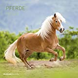 Pferde 2020 - Horses - Wandkalender - Broschürenkalender (30 x 60 geöffnet) - Tierkalender - Wandplaner