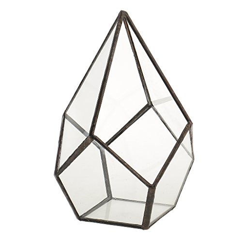 Baoblaze Luft Pflanzer Mini Glas Terrarium Geometrisches Glasterrarium Sukkulenten Pflanzen...