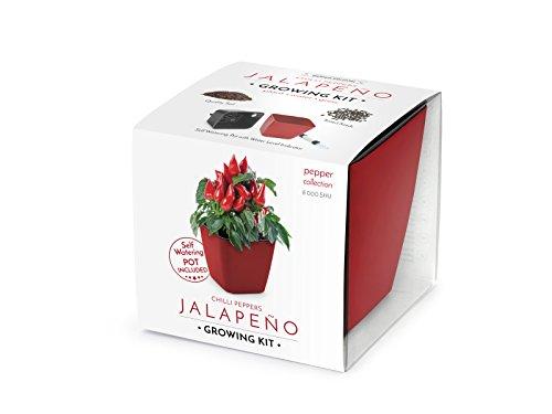domestico set di chilli per la coltivazione, chilli peppers growing kit (rosso), all-in-one set - vaso autoinnaffianti 13x13 cm, i semi, il substrato fresco pieno di nutrienti