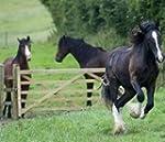 HORSE PONY GATEWAY REPAIR PADDOCK OVE...