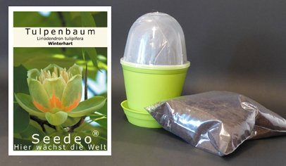 Seedeo Anzuchtset Tulpenbaum (Liriodendron tulipifera)