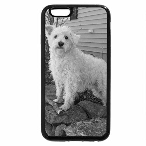 iPhone 6S Plus Case, iPhone 6 Plus Case (Black & White) - White Schnauzer (Schnauzer-rock)