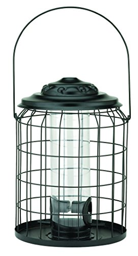 chapelwood-cpw1649-anti-squirrel-de-pajaro-seed-feeder-negro