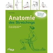Anatomie des Stretchings: Mit der richtigen Dehnung zu mehr Beweglichkeit