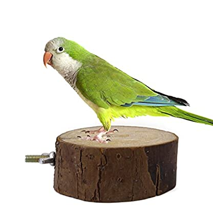 Parrot Bird Cage Toy Wooden Perch Stand Dia. 8-9cm 4