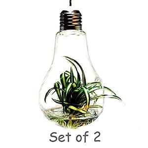 Set of 2 Creative Hanging Glass Vase Succulent Air Plant Display Terrarium, Free Hanging Strings (Bulb Vase-1)