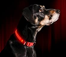 """Illumiseen LED Dog Collar - USB Rechargeable - Available in 6 Colours & 6 Sizes - Makes Your Dog Visible, Safe & Seen - Red, X-Small (9 – 13.7"""" / 23 – 35cm)"""