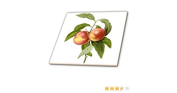 3dRose CT 106863//_ 1/Redoute Vintage Watercolor Fruit Zwei Pfirsiche Prunus sp-Ceramic Fliesen 4-Zoll