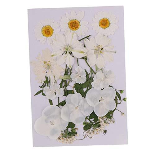 P Prettyia Getrocknete Blumenblätter Gemischte Natürliche Gemischte Gepresste Getrocknete Blumen für DIY Handwerk
