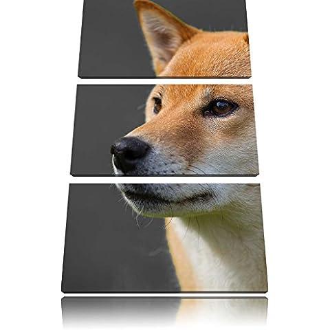 cane spitz finlandese immagine 3 PC immagine su tela 120x80 su tela, XXL enormi immagini completamente Pagina con la barella, stampe d'arte sul murale cornice gänstiger come la pittura o un dipinto ad olio, non un manifesto o un baner