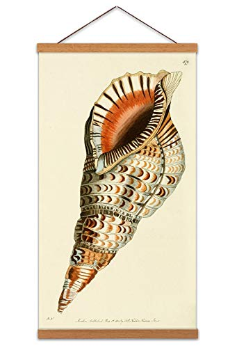 Biodiversity Sea Shell Canvas Wall Art Print Poster Magnetic Hanger Clip Frame 24x12 Inch Wand