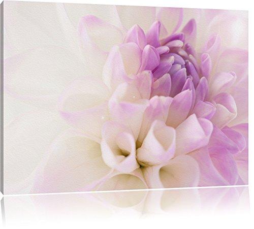 wunderschöne Blüte mit lila Blütenblätter schwarz/weiß Format: 120x80 auf Leinwand, XXL riesige...