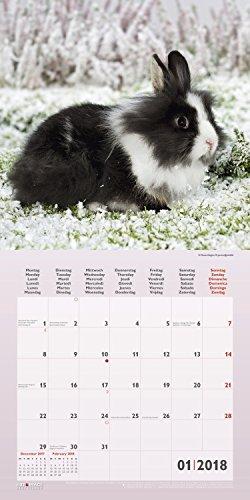 Kaninchen 2018 – Tierkalender, Kaninchen-Kalender, Hasenkalender, Haustierkalender  –  30 x 30 cm - 2