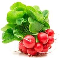 Fruchtknall Radieschen 1 Bund