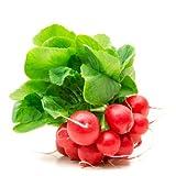 Fruchtknall Radieschen 3 Bund