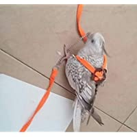 Taiyo Pluss Discovery Bird Leash/Adjustable Harness and Outdoor Training 31 Inch, Body L-7 Inch (Orange)