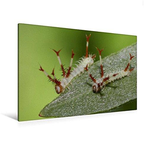 Calvendo Premium Textil-Leinwand 120 cm x 80 cm quer, Nagelfleck | Wandbild, Bild auf Keilrahmen, Fertigbild auf echter Leinwand, Leinwanddruck Tiere Tiere