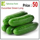 #10: Splendour Seeds Cucumber Seeds - Green Long - 50 Seeds
