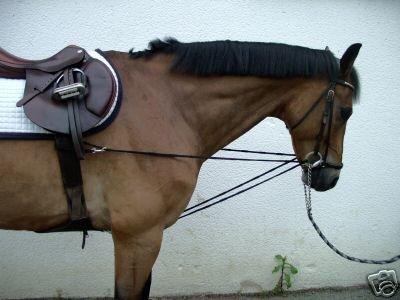 pfote-und-huf Dreieckszügel Wiener Zügel Laufferzügel Pony