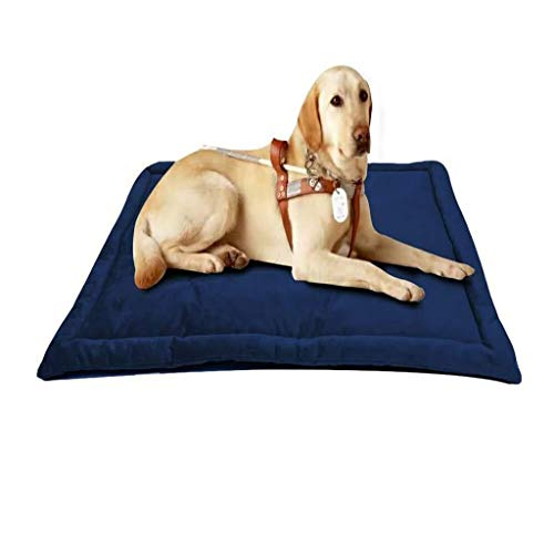 Chunchun The Dog'S Bed