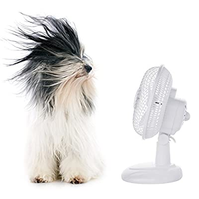 Pro Elec 6-Inch Portable Adjustable Tilting Tilt Electric Air Cooling 2 Speed Home Office Fan - White