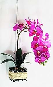 orientalischer stil 30 cm kirschrot bl ten der phalaenopsis orchidee aus seide. Black Bedroom Furniture Sets. Home Design Ideas