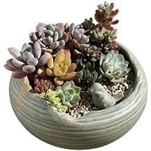 Maceta de cerámica con diseño de cuenco bajo de Better-way, para plantas suculentas
