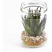 Suchergebnis auf f r pflanzen im glas for Pflanzen im glas