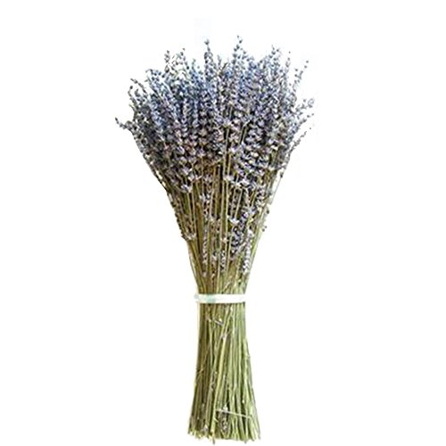 Cozyhoma Lavendel-Bündel aus natürlichem getrocknetem Lavendel, frisch geerntet, königlicher Samt, Lavendel, für Heimwerker, Party, Hochzeit, Dekoration, 4 Bündel, 2 Pack Purple, 2er-Pack - Lavendel Samt