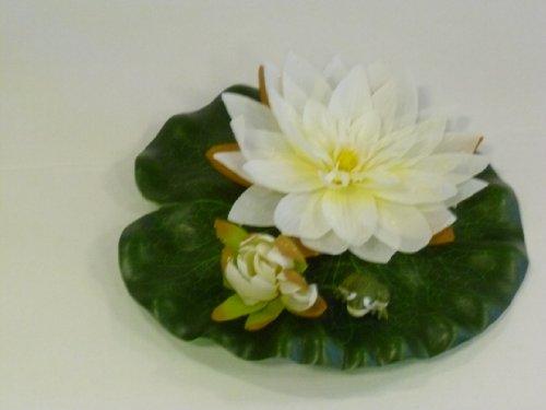 Apollo-gardening-ltd-ubbink-nnuphar-blanc-grenouille-24-cm-1389433