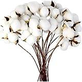 Ruiuzioong - Llenador de flores artificiales de algodón seco natural para decoración del hogar (20 unidades)