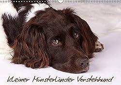 Kleiner Münsterländer Vorstehhund (Wandkalender 2020 DIN A3 quer)