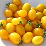 SeeKay Tomato 'Ildi' - Yellow 120 seeds