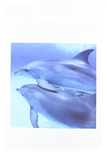 3drose FL _ 46217_ 1Zwei junge Delfine Steele frontals Schwimmen zusammen, Dolphin Baustellen Bahamas Garten Flagge, 12by-18Zoll (T-shirt Bahamas-flagge)