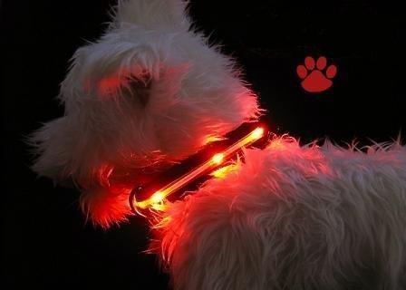 hundeinfo24.de Esky LED Halsband / Hundehalsband / Leuchthalsband dog collar mit roter LED-Beleuchtung, 2 Modi, Länge einstellbar zwischen 13,5 Zoll und 21 Zoll,360 Grad sichtbar,