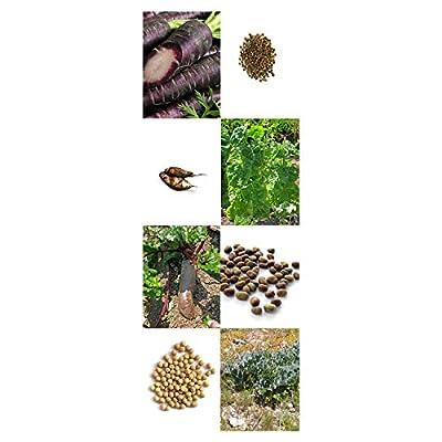 Samenset: 'Alte Historische Gemüsesorten' von Magic Garden Seeds - Du und dein Garten