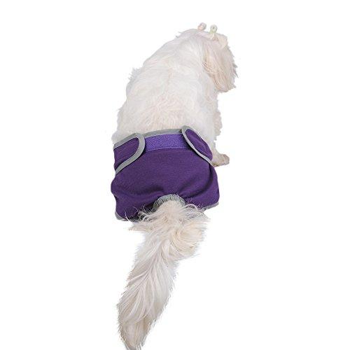 Molie Culotte Hygiénique Pantalon Couche Bretelles pas cher pour grande grosse moyenne chienne femell
