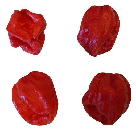 """Trinidad 7 Pot Douglah""""Red"""" (Schärfer als Bhut Jolokia) 10 Samen (RARITÄT)"""