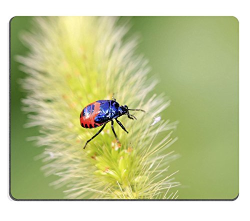 liili-mouse-pad-natural-rubber-mousepad-image-id-22406589-stinkbug-larve-on-green-leaf-in-the-wild-s