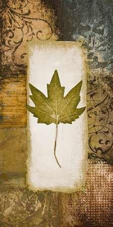 Single Leaf II by Marcon disponibile, Michael-Stampa artistica su tela e carta, Tela, MEDIUM (22.5 x 45.75 Inches )