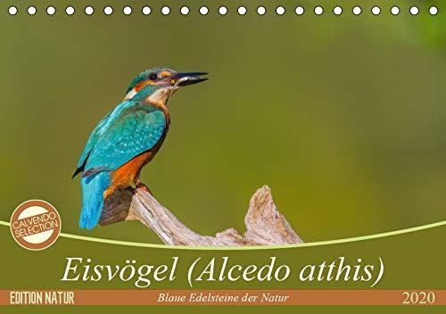 Eisvögel (Alcedo atthis) - Edelsteine der Natur (Tischkalender 2020 DIN A5 quer): Eisvögel - die kleinen bunten Gesellen in unserer Heimat (Monatskalender, 14 Seiten ) (CALVENDO Tiere)